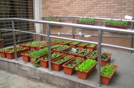 民安社区菜园