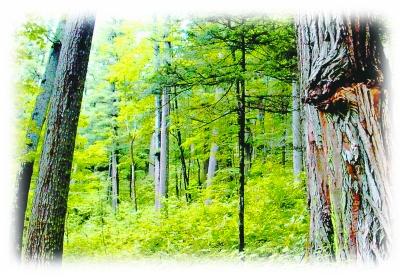 大海林原始森林。