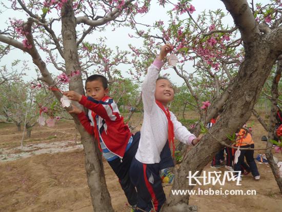 树的简笔画; 赏桃花 登长城