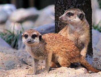 """本报讯 (记者 栾吟之)""""五一""""期间,上海野生动物园里的小动物乐园经"""