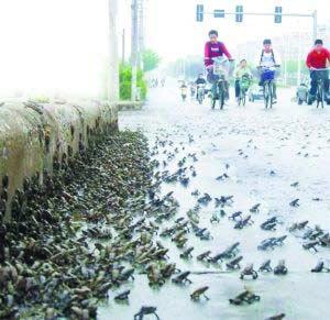 南京大量蛤蟆集体上街。