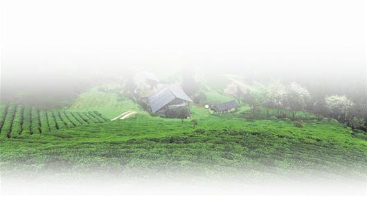 走出了一条以生态为基础,以产业为支撑,以开放为动力,生态环境优良