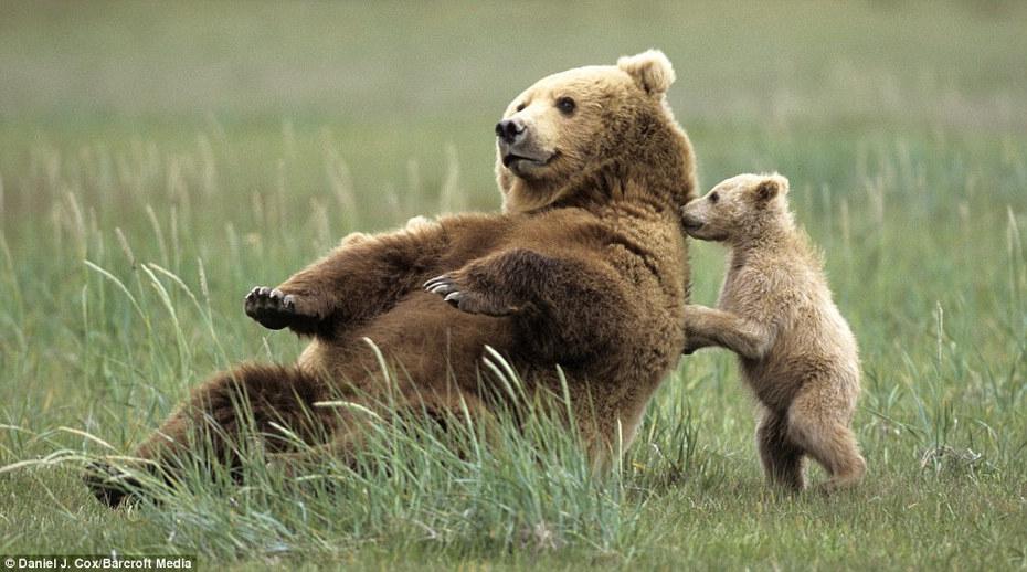 动物宝宝学本领棕熊