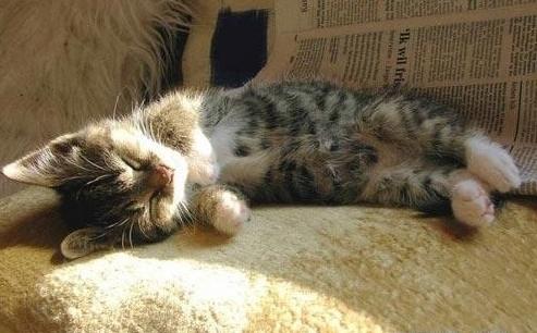 各种动物慵懒睡姿抓拍(组图)