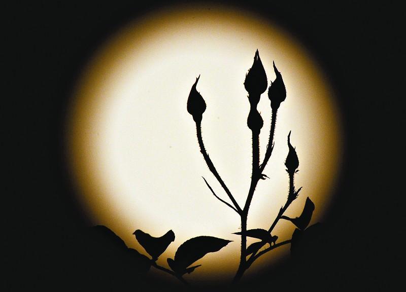 """林清玄/据新华社电""""十五的月亮十六圆。"""