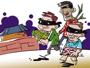 漫画多次窜入农户家偷团伙玉米贱卖获利(图)与男大葱男图片