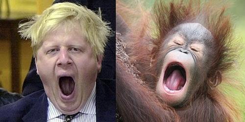 约翰逊打哈欠的照片,与猩猩表情相似