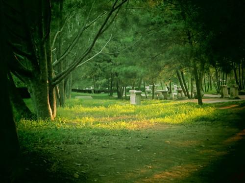 圆明园/在圆明园内到处可以看到流浪猫的身影,大片的树林草丛成为它们...