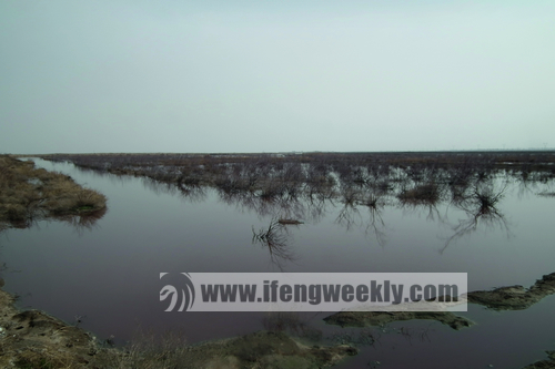 官地营村边的滩地,盛不下的污水都被排到这里。图片:杨桐