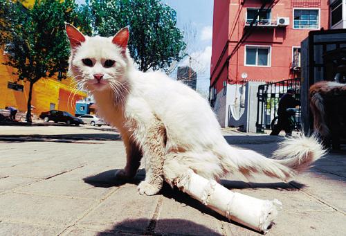 辽宁 先农坛路/先农坛路一家杂货店收养的流浪猫不知被什么人打断腰和双腿,...