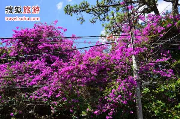 越南街头的花开的正艳