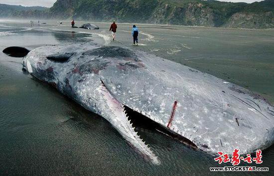 鲸鱼的结构图片