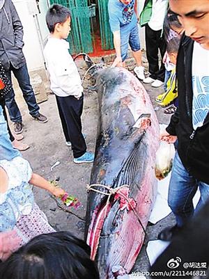 济南5月24日消息(山东台记者姜文超)据中国之声《央广新闻》报图片