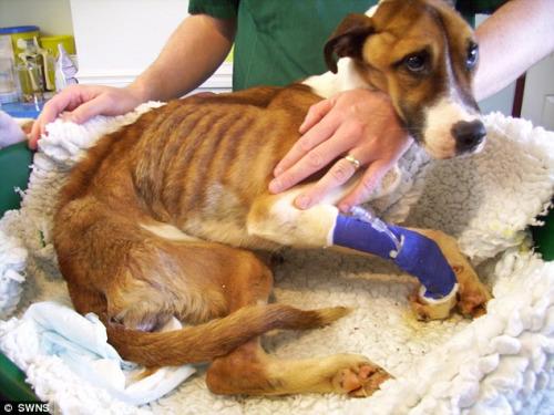 被捡回的小狗瘦骨嶙峋,眼神令人生怜