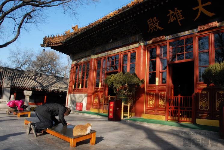 """北京 广济寺/动物趣闻:吃素拜佛""""神猫""""和会多种语言鹦鹉(组图)"""