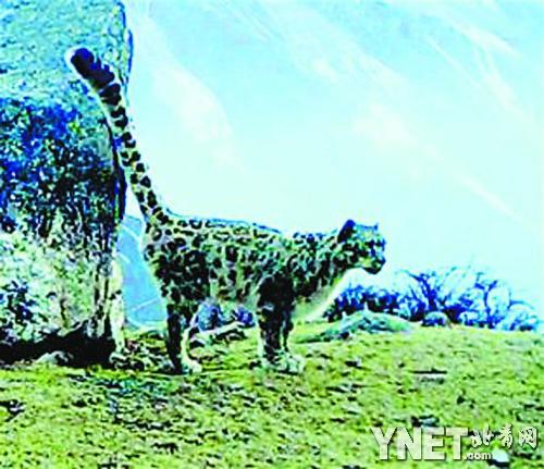 贡嘎山/6月2日从贡嘎山国家级自然保护区管理局传来消息,保护区第一次...