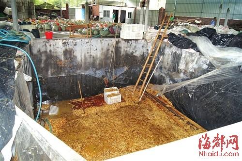 在这个数十平方米的大池子里,黑心商家用工业柠檬酸泡出了35吨金针菇
