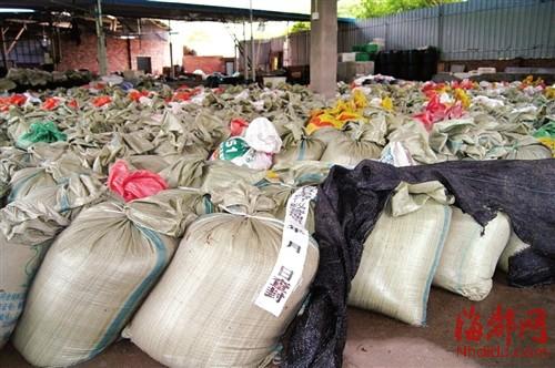 600多袋已加工好的金针菇被当场查封