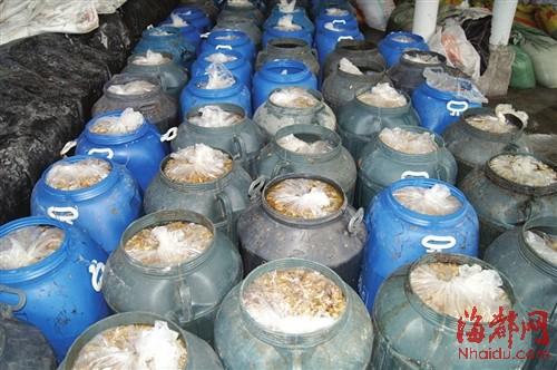 60多桶还在工业柠檬酸和盐水中浸泡的金针菇