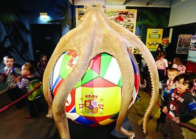 """竞猜欧洲杯,竞彩彩民也可当预测神准的""""章鱼帝""""。"""