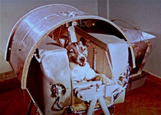 首个进入太空的动物莱卡狗