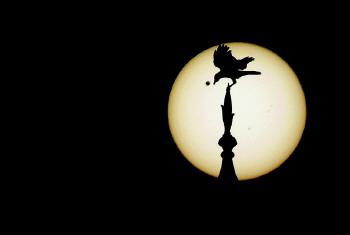 """金星凌日 飞鸟/6月6日,天宇上演罕见天象""""金星凌日""""。"""