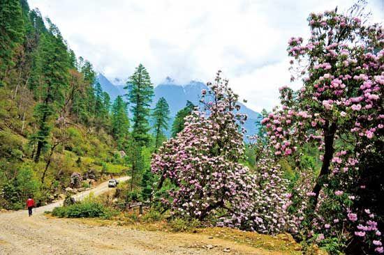 这一路风景极好,花繁茂得爬满整棵树。