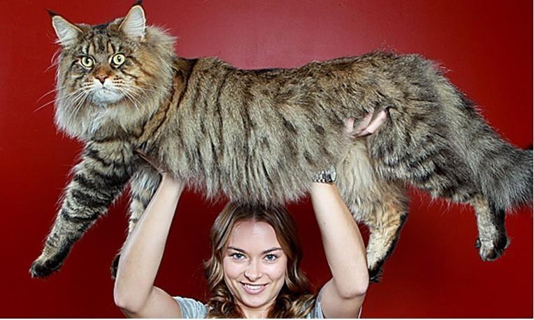 葫芦上猫图,世界上最大的蛇,世界上最大的猫图,史上最可爱的猫