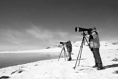观鸟者在班德湖畔观赏斑头雁