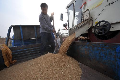 """机械播种粮食收购""""一条龙方式,把农民从高强度的体力劳动中解放出来图片"""