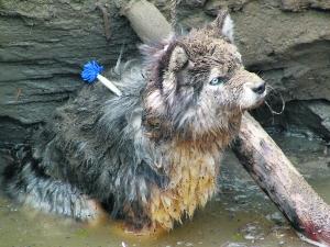 幼交狼�_被困在坑中的幼狼 n8