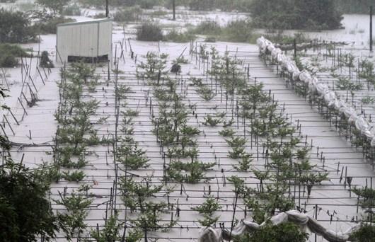 全台湾大雨滂沱,菜价也蠢蠢欲动。台湾北部昨天午后降雨趋缓,新北市一处黄昏市场挤满了抢购蔬菜的民众图片来源:台湾《联合报》
