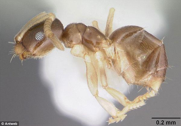 科学家首次拍摄高清晰拍摄全球昆虫物种 汇编3D高清图库