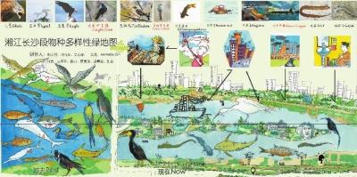 《湘江长沙段物种多样性绿地图》局部。图左部分为湘江长沙段过去的鱼类和鸟类,图右部分为湘江长沙段现存的部分物种及大学生们了解到的物种变化原因。郭融供图