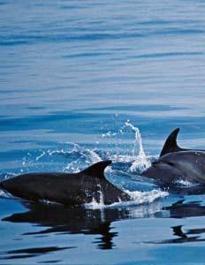 台湾鲸鱼种类众多-宝岛旅游让 鲸喜 不断 跟着专家赏台湾鲸豚