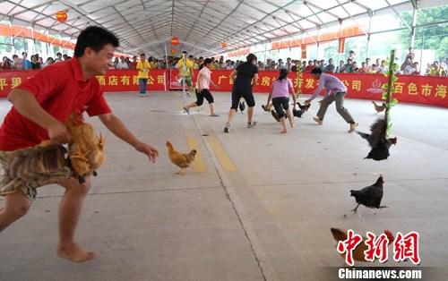 广西端午举办传统抓猪抓鸡活动(组图)