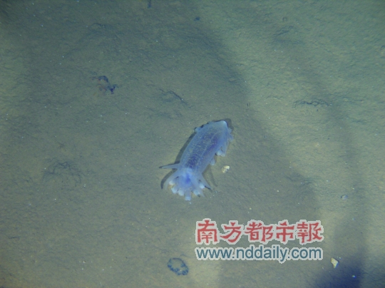 """""""蛟龙""""号明日再探7000米深海(组图)"""