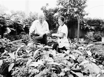 邓世福/陈露与邓大爷一道为花草浇水。记者彭瑜摄