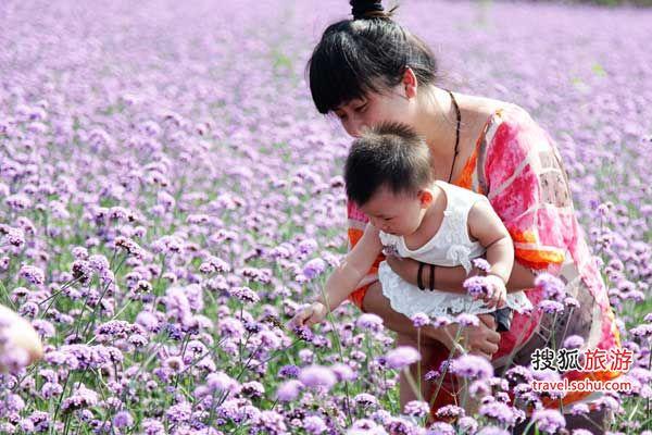 北京香草世界 抒发浪漫情怀