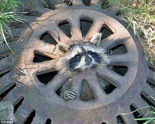 这只可怜的小动物后,便赶忙回屋去拿了洗碗剂,小心翼翼地移开了井盖