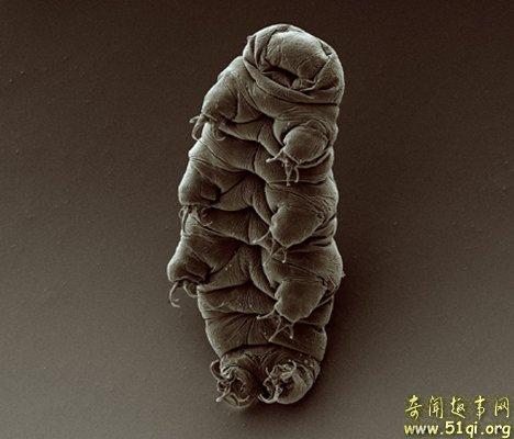 Tardigrades:显微镜下的生命
