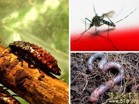 蟑螂、蚊子和蚯蚓