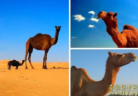 终极沙漠居民
