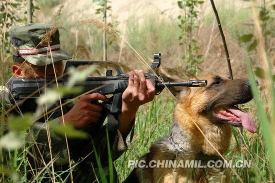 特战队员与警犬隐蔽待敌