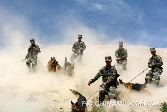 利用警犬对可疑目标进行搜索和追击