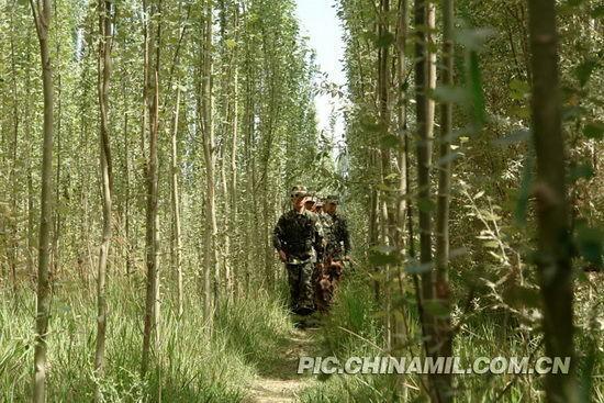 武警小分队丛林中巡逻