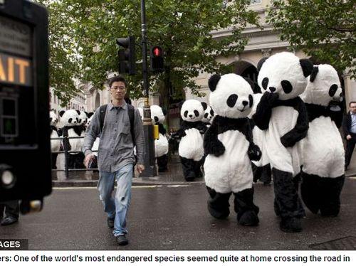 """伦敦/伦敦街头涌现""""熊猫人""""(网页截图)"""