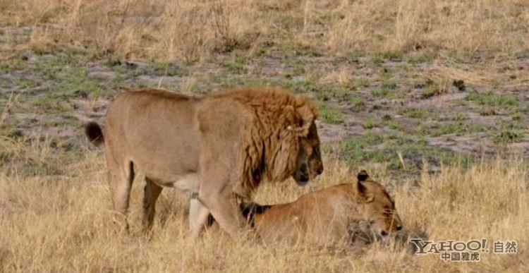 """澳大利亚国家大学行为生态学家黛安娜-费希尔说:""""几乎每一个动物都很"""
