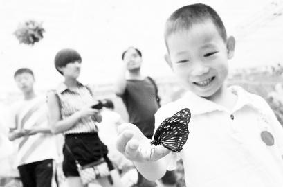 蝴蝶 狂欢/游客同蝴蝶亲密接触。
