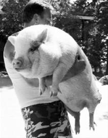 见到真相请不要心碎是猪,就一定会长成猪.图片
